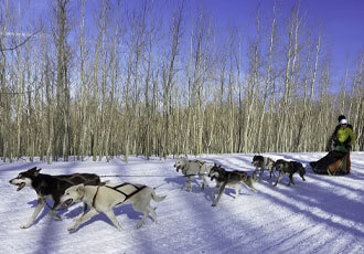 Dog sled year-round in Pagosa Springs